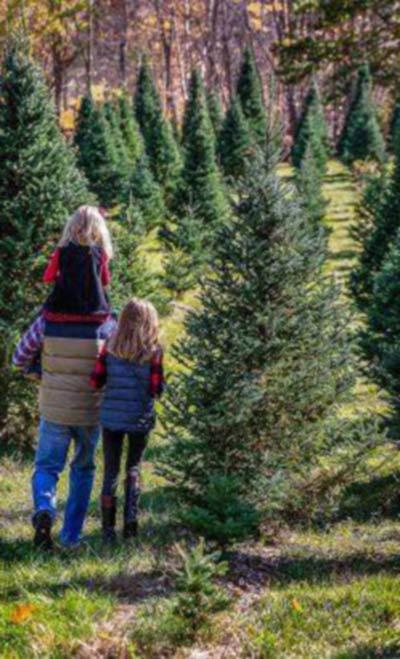 Family Christmas Tree Farm Otisville Michigan