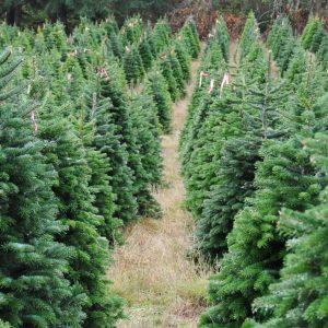 Northwoods Tree Farm Testimonials