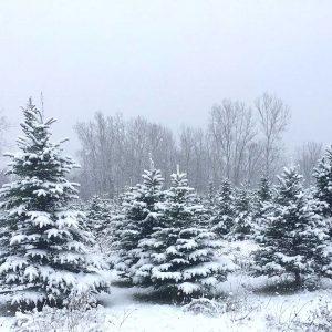 About Northwood's Tree Farm, Otisville Michigan