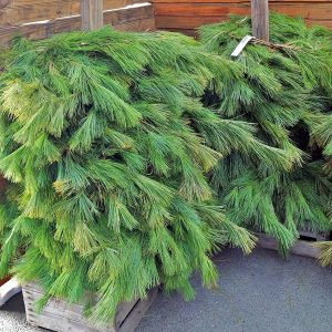Holiday/Christmas greens (wreaths and garland) for sale Otisville Mi